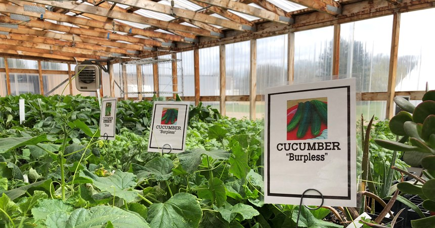 LCMS Awards $1,500 to Dakota Boys and Girls Ranch Greenhouse Program