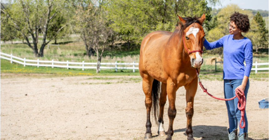 From Chaos to Calm: Horse Inspired Healing